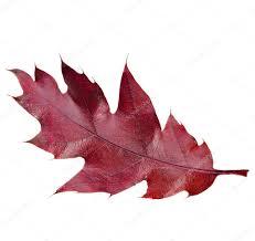 hr-leaf-1-e1498492720806